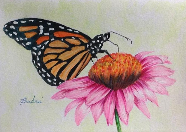 pink flower monarch butterfly drawing