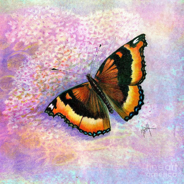 small orange and black butterfly drawing