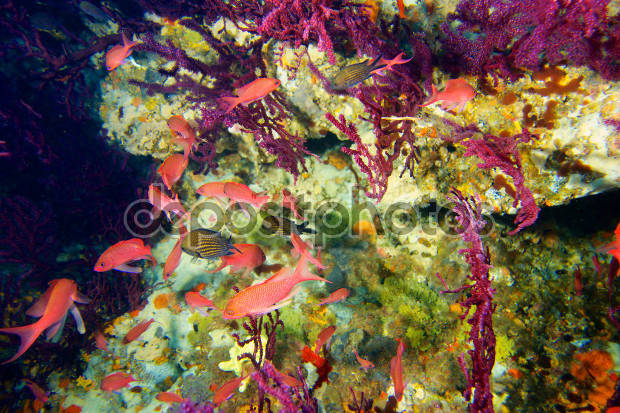 underwater nature photography1