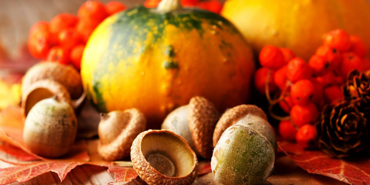 thanksgiving-pumpkins-by-desktopnexus