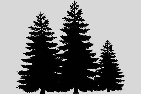 pine tree outline clipart
