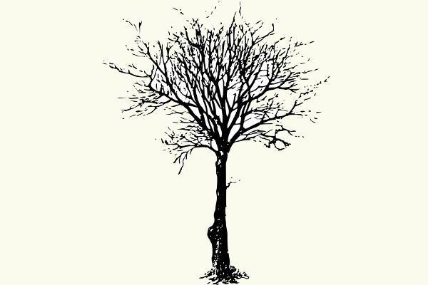 black leafless tree clipart