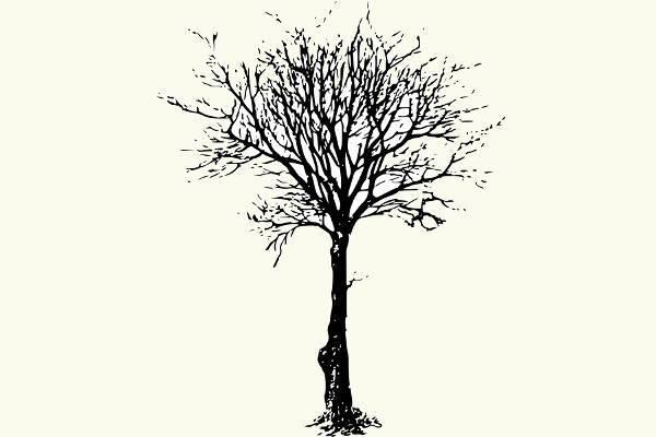 black leafless tree clipart