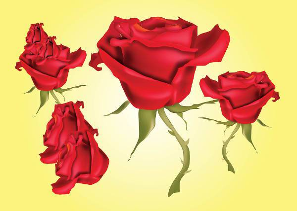 Red Rose Buds Vector
