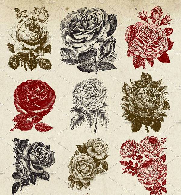 Beautiful Vintage Rose Vector