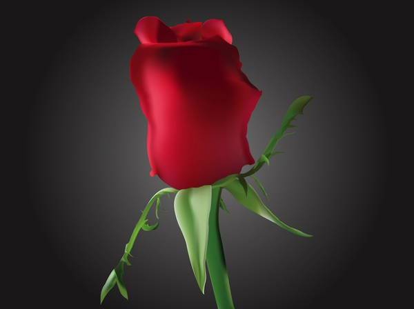 Romantic Rose Bud Vector