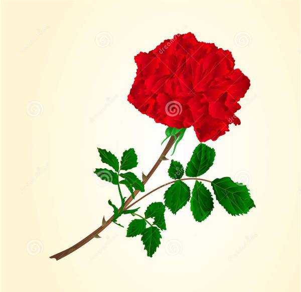 Red Rose Stem Vector