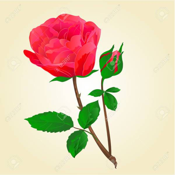 Twig Red Rose Stem Vector