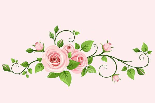 Pink Rose Vine Vector