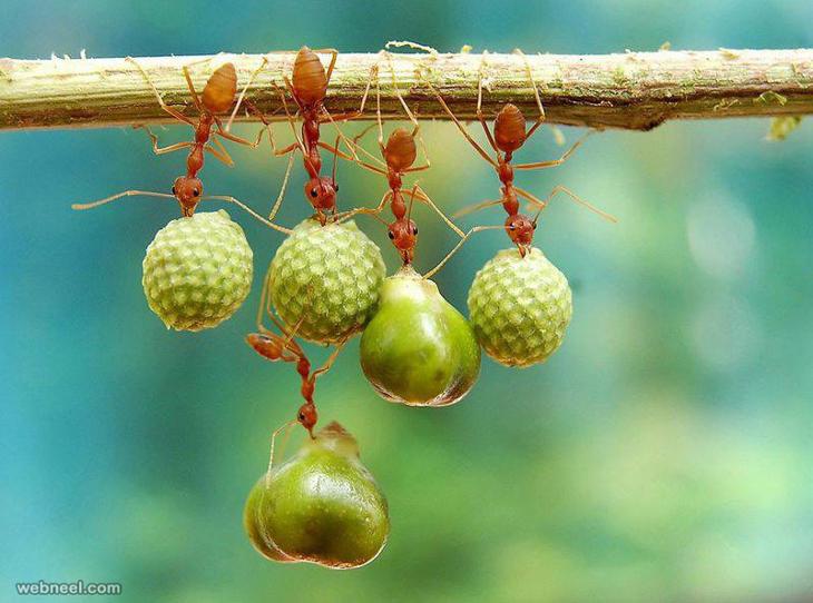 ants close up