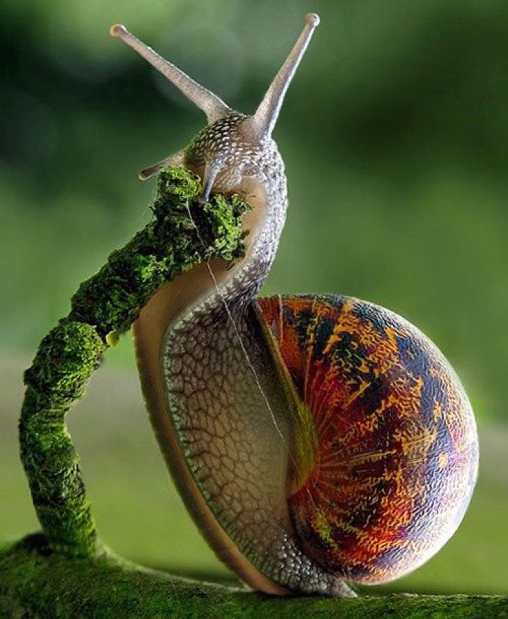 snail close up