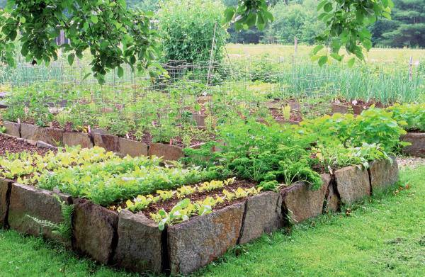 Raised Herb Garden Bed Design