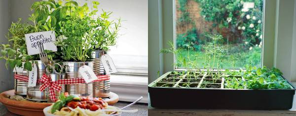 indoor herb garden1