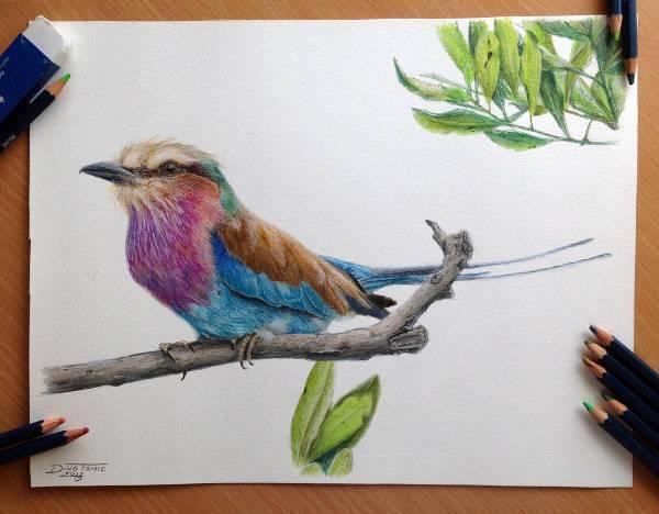 cool color pencil bird drawing