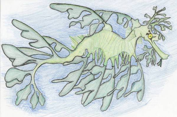 colorp pencil sea dragon drawing