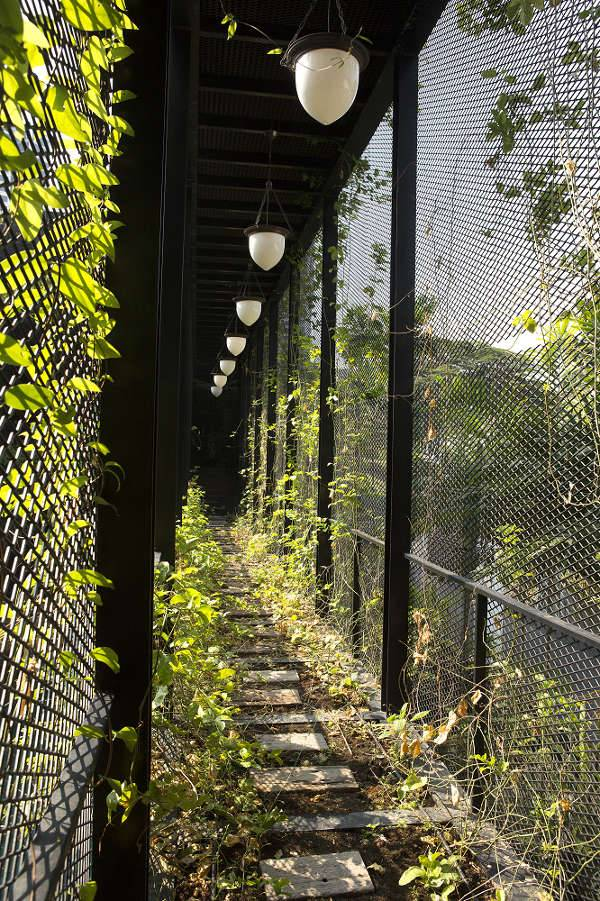 Bridge of Passion Fruits Providing Shade and Privacy Screen