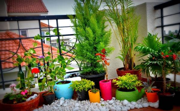 tiny terrace