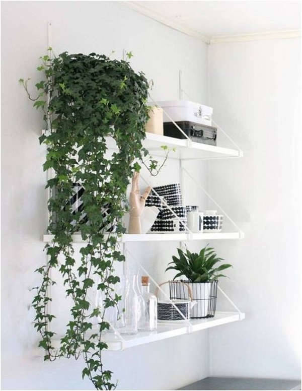 Indoor Vines