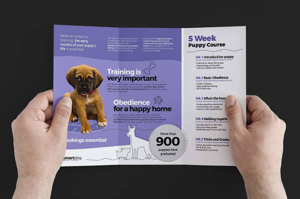 School Puppy Brochure Template