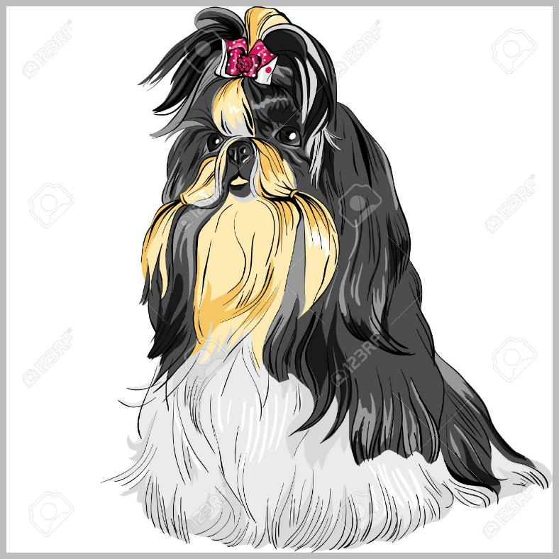 dogillus011
