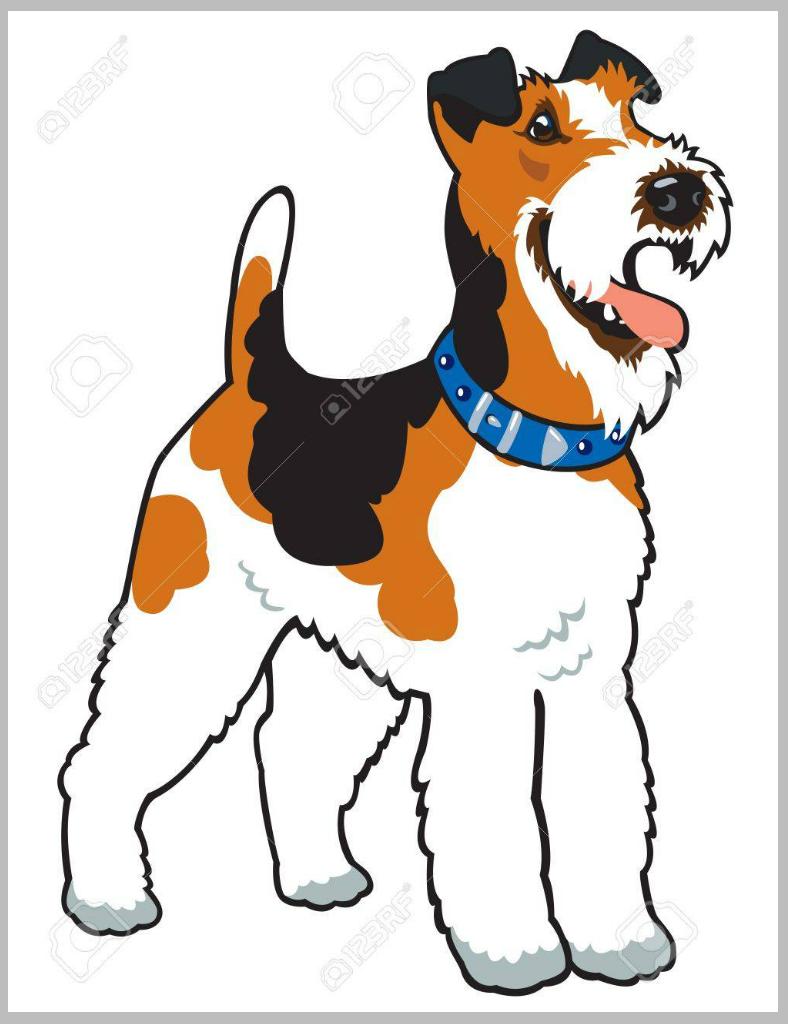dogillus012